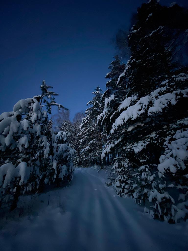 Природа Экопоселок Русский лес